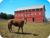 horse-and-barn_thumb Featured Opinion
